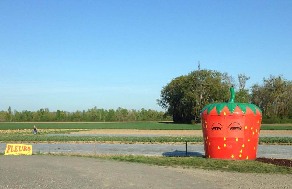 libre-cueillette-fraise-nordhouse